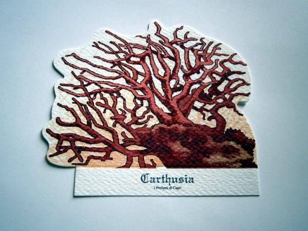 Corallium by Carthusia